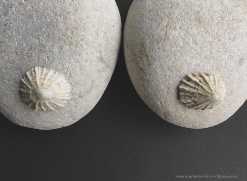 pebble art, breasts