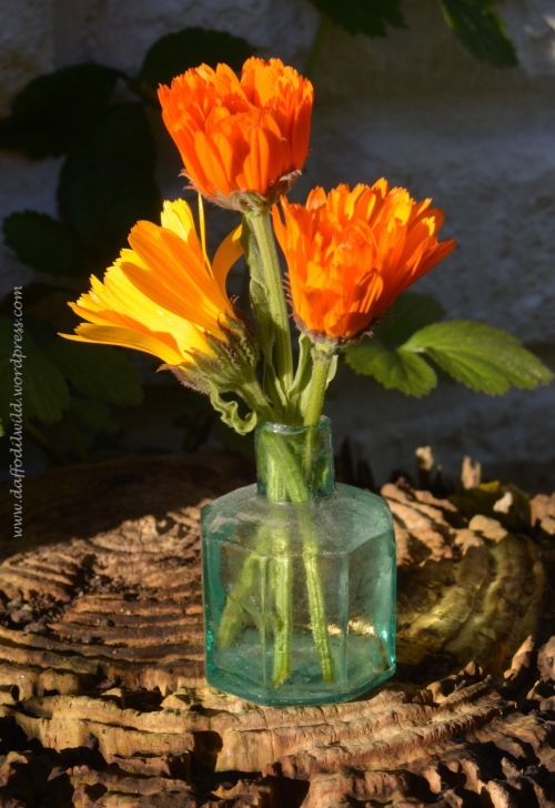 marigolds in ink pot